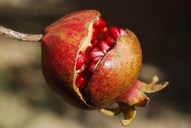 pomegranate-185456_640.jpg