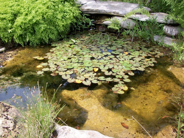 pond-213_640.jpg