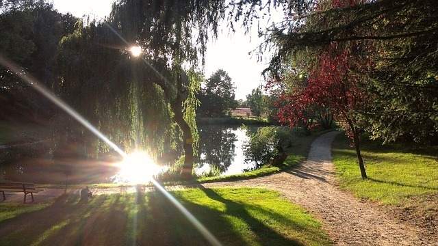 pond-57861_640.jpg