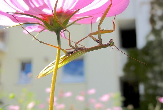 praying-mantis-59153_640.jpg