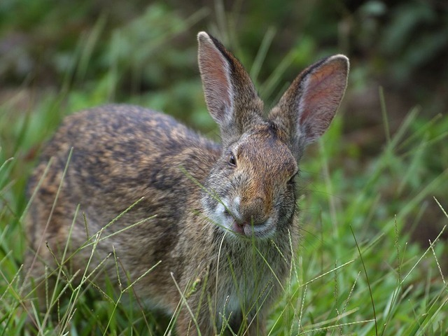 rabbit-3219_640.jpg