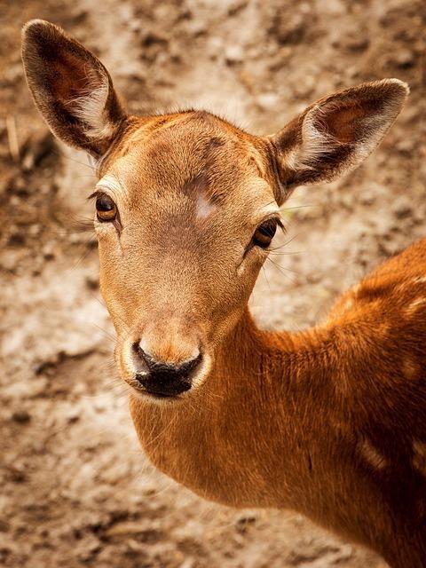 roe-deer-173132_640.jpg