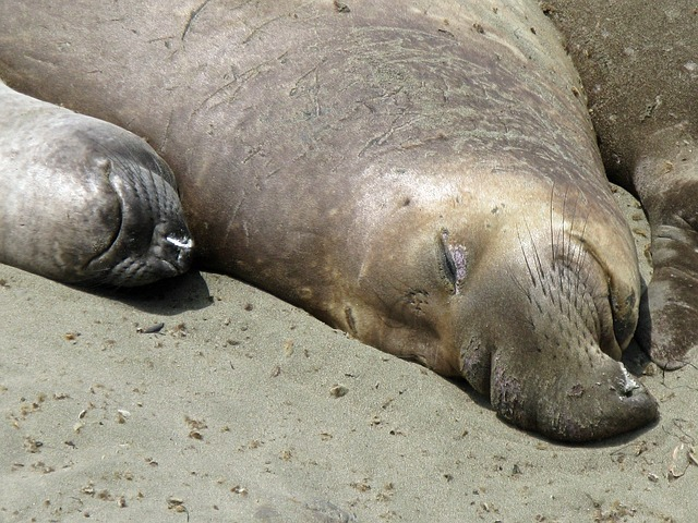 sea-lions-23021_640.jpg