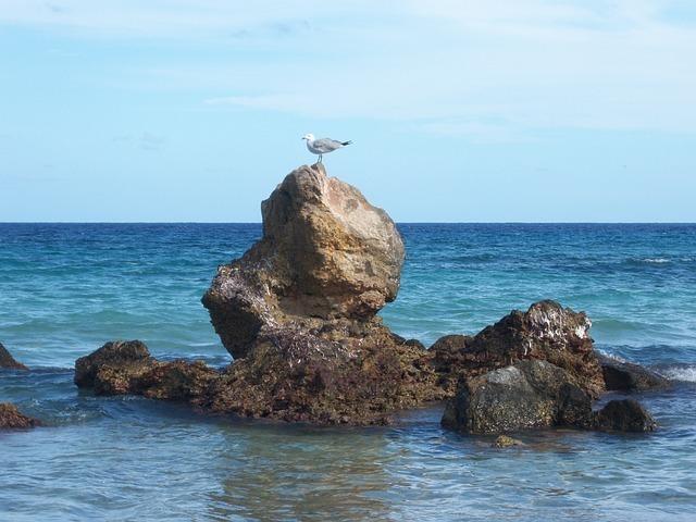 seagull-22627_640.jpg