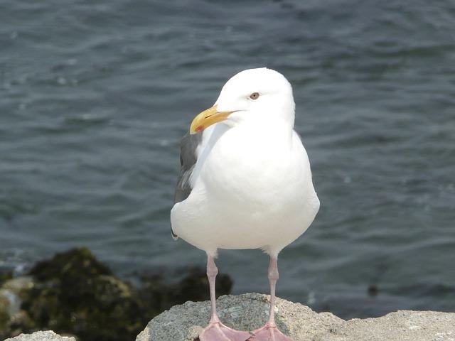 seagull-53883_640.jpg
