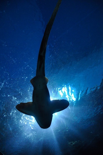 shark-164899_640.jpg