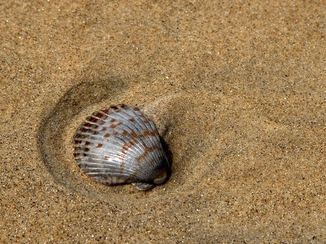 shell-3234_640.jpg