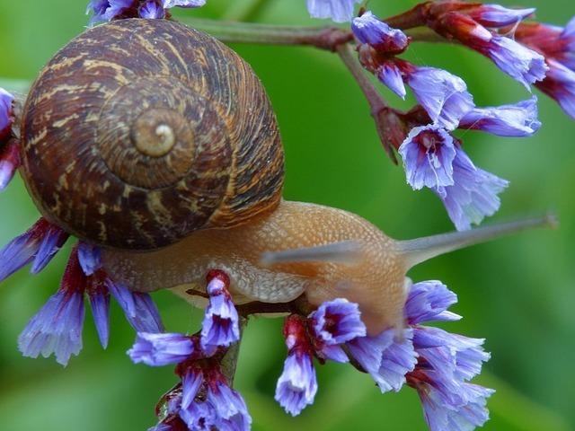 snail-3235_640.jpg