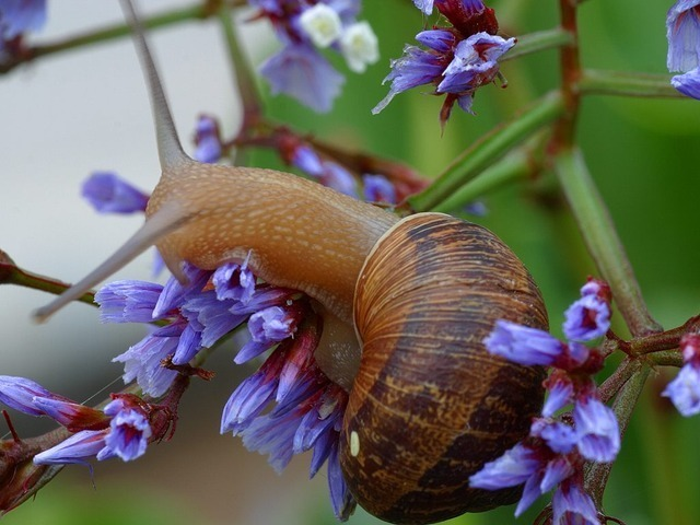 snail-3236_640.jpg