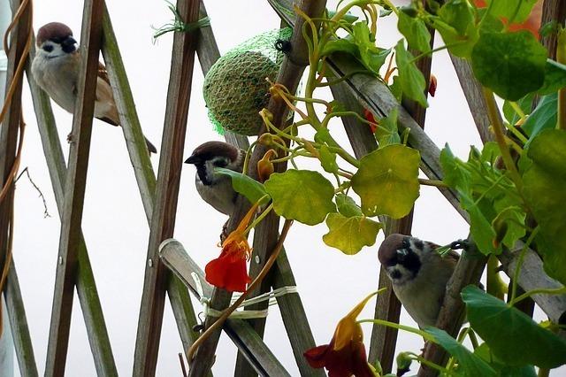 sparrows-57030_640.jpg