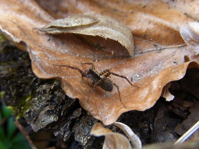 spider-54594_640.jpg