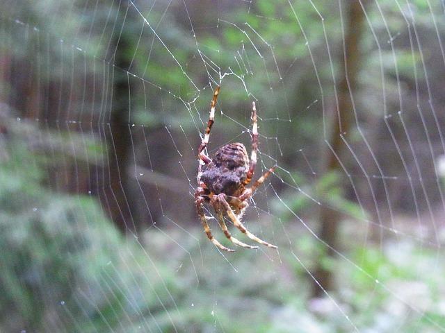 spider-56791_640.jpg