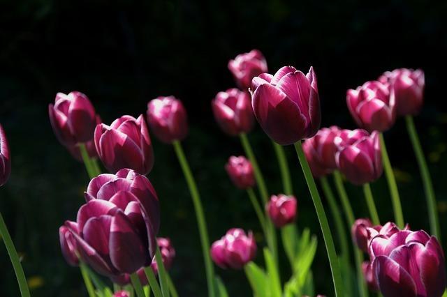 spring-108810_640.jpg