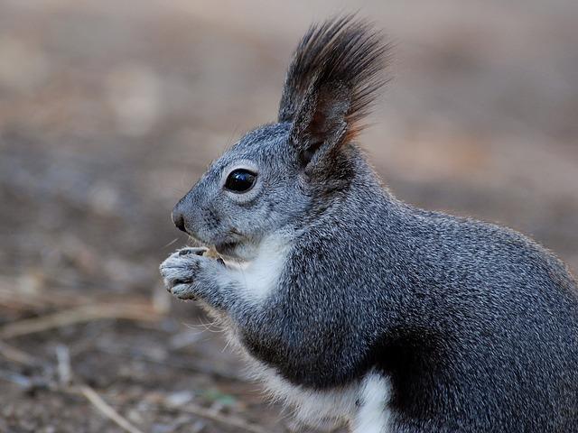 squirrel-112100_640.jpg