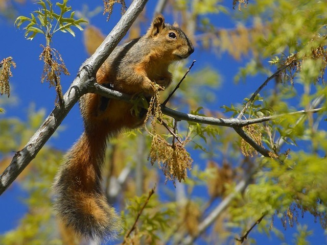 squirrel-3241_640.jpg