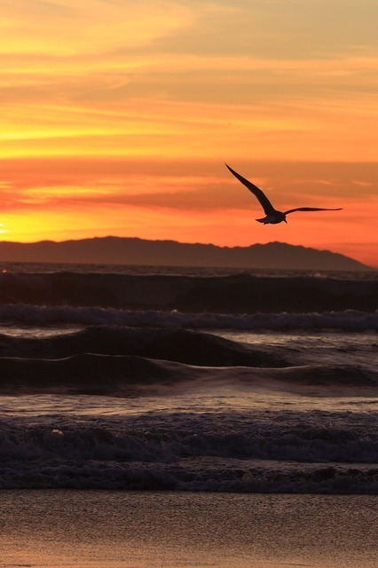 sunset-2400_640.jpg