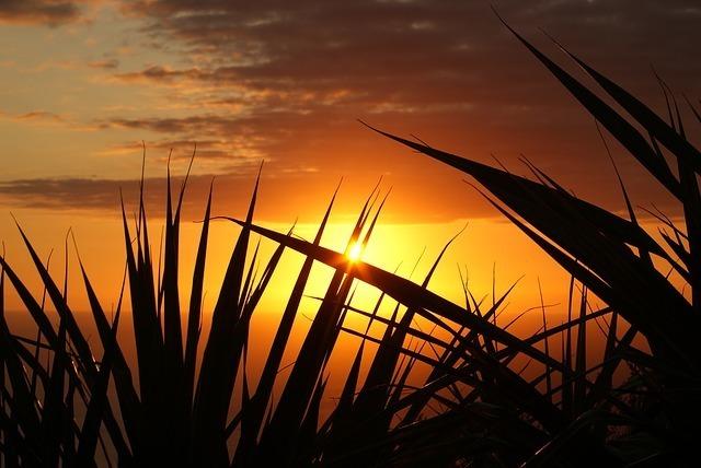 sunset-379651_640.jpg