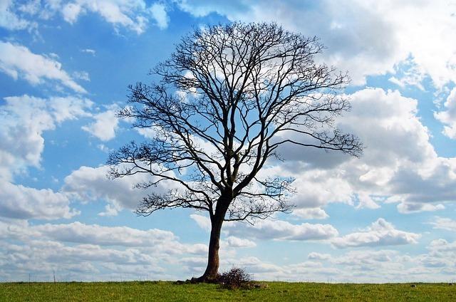 tree-164915_640.jpg