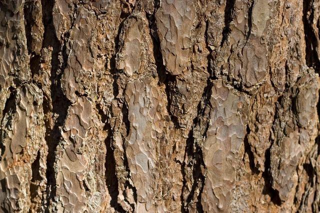 tree-1698_640.jpg