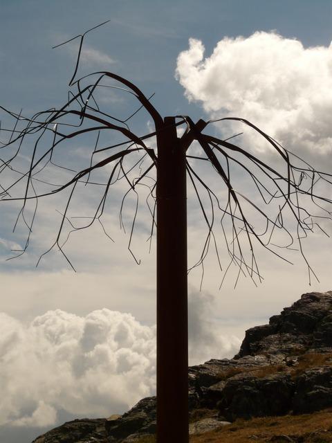 tree-794_640.jpg