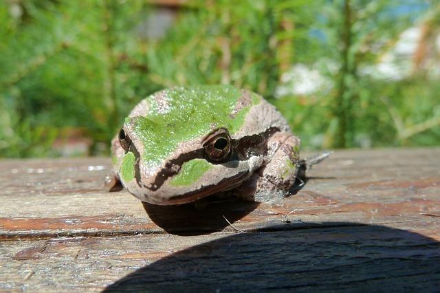 tree-frog-59529_640.jpg