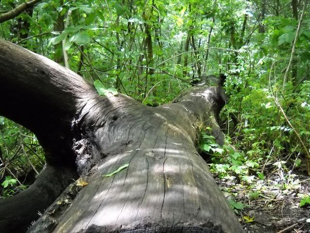 trees-2251_640.jpg