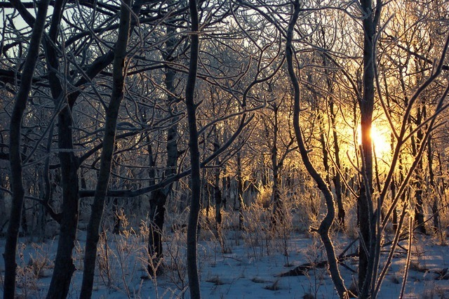 trees-2699_640.jpg