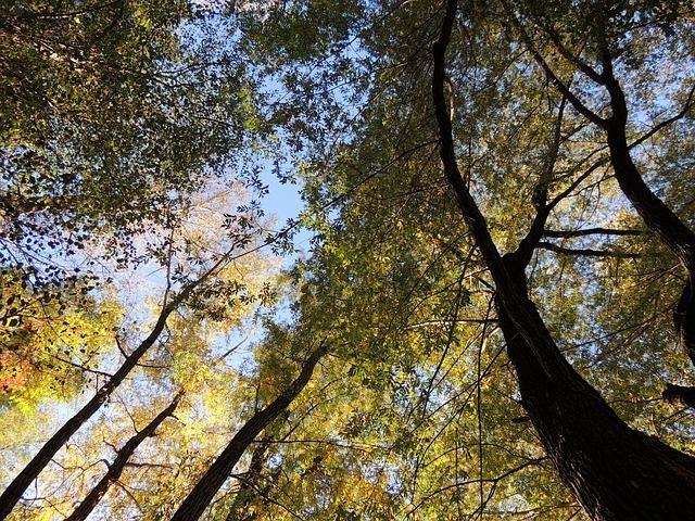 treetop-63481_640.jpg