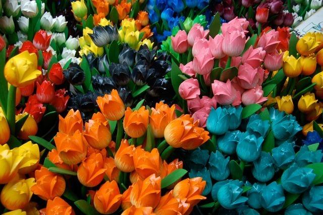 tulips-2849_640.jpg