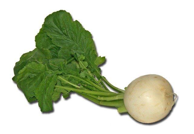 turnip-1129_640.jpg