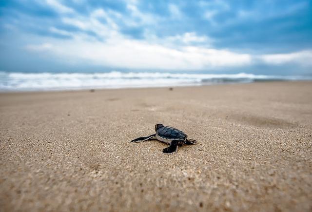 turtle-2201433_640.jpg