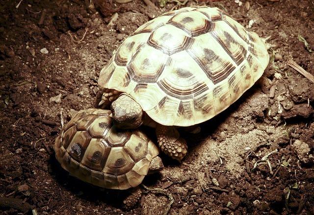 turtle-55458_640.jpg
