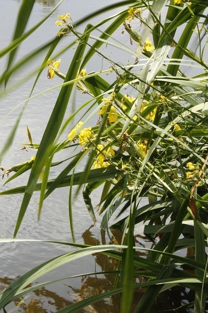 vegetation-57046_640.jpg