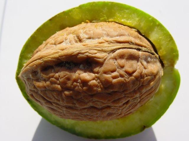 walnut-1053_640.jpg