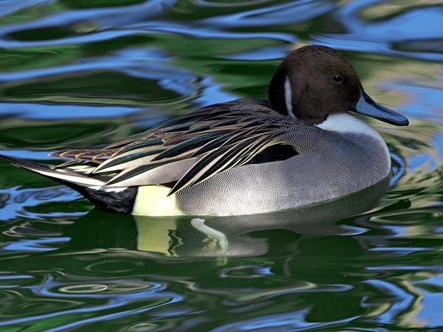 water-bird-3246_640.jpg