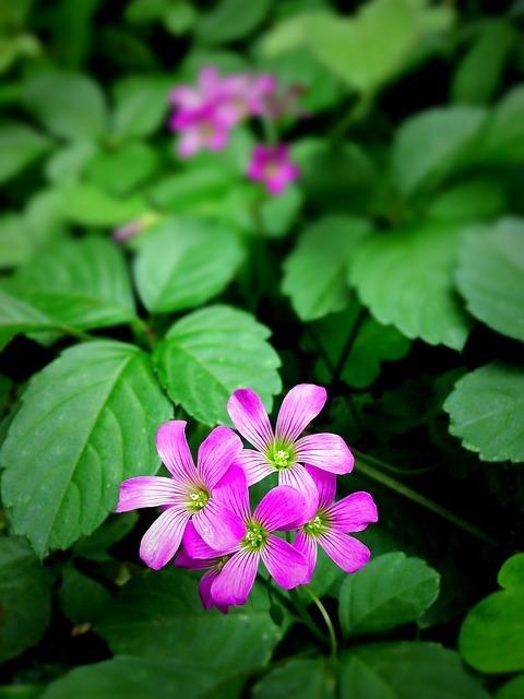 wildflowers-129502_640.jpg