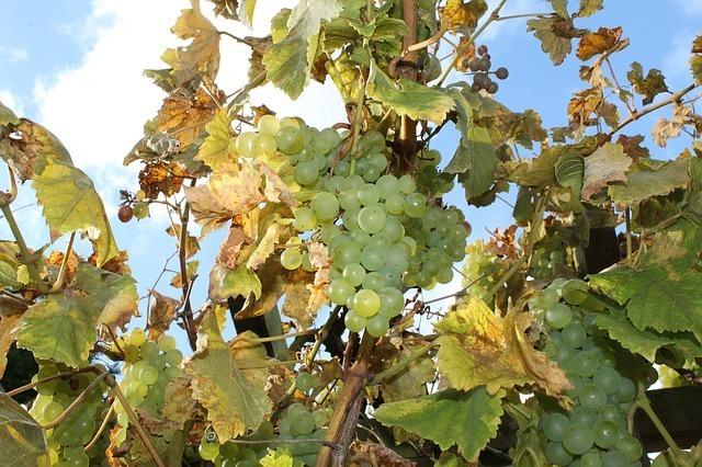 wine-63439_640.jpg