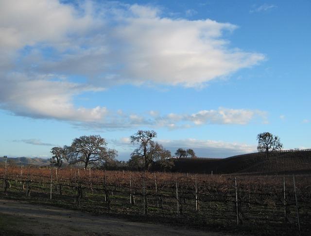 wine-country-59025_640.jpg